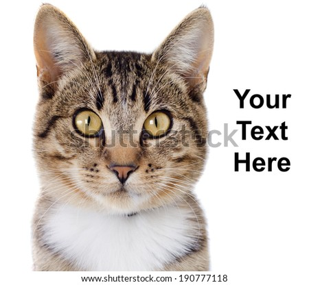 A tabby cat portrait with room for your text, isolated against a white background.