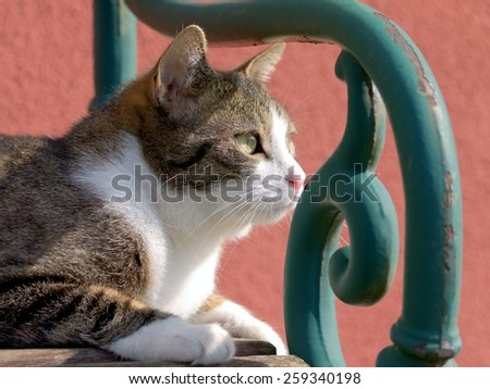 A tabby cat sitting on a bench.  - stock photo