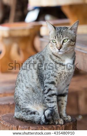 A tabby cat sitting on stump - stock photo
