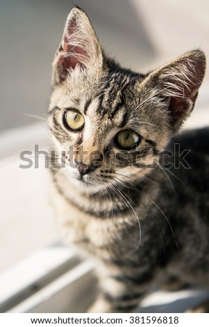 A tabby European Shorthair kitten with a sad expression, in front of a window. - stock photo
