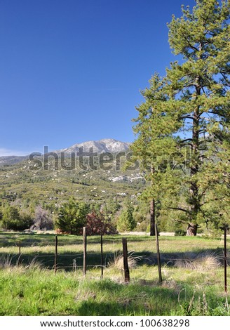 A tall ponderosa pine tree frames this view of a mountain meadow on Mount San Jacinto in Southern California.