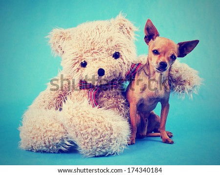 a teddy bear with his arm around a tiny chihuahua done with a vintage retro instagram filter - stock photo