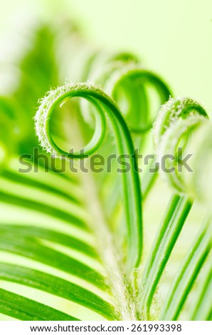 a tendril, macro of plant - stock photo