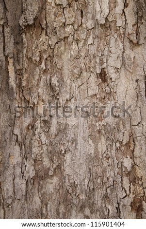 A texture of brown tree bark is shown close up. - stock photo