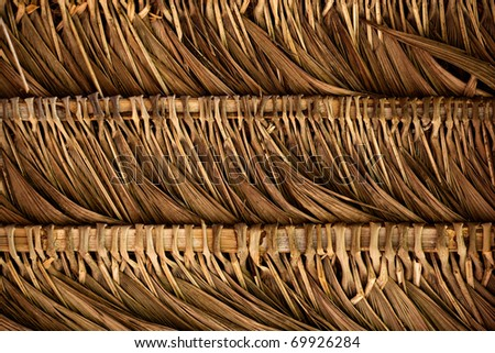 A thatched Roof in the Ecuadorian Amazon Jungle