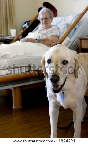 A Therapy dog and a hospice patient enjoys each other's company during rehabilitation.  Note:  Some grain present.