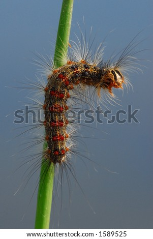 A thorny caterpillar on a green branch
