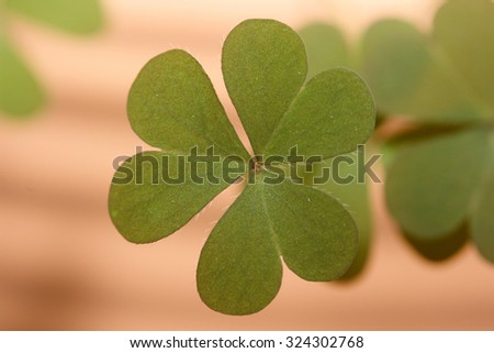A three-leafed clover, background out of focus