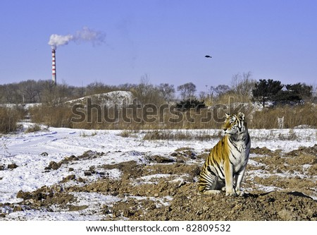 A tiger sits as a smokestack pollutes the air and his habitat is destroyed - stock photo