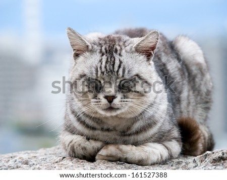 A tiger striped cat sleeping on a rock. - stock photo