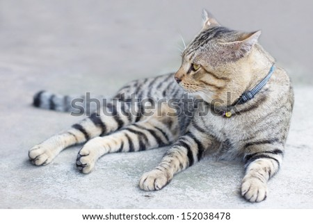 A tiger (tabby) cat relaxing on the floor - stock photo