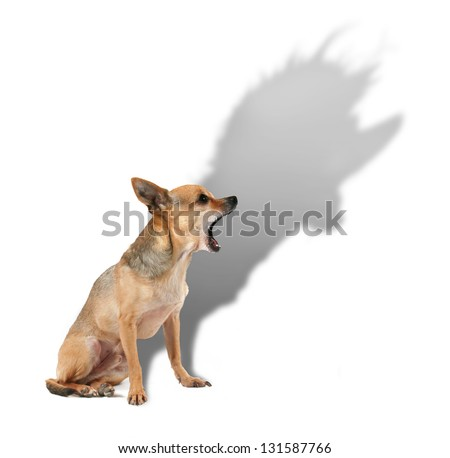a tiny chihuahua with a large shadow
