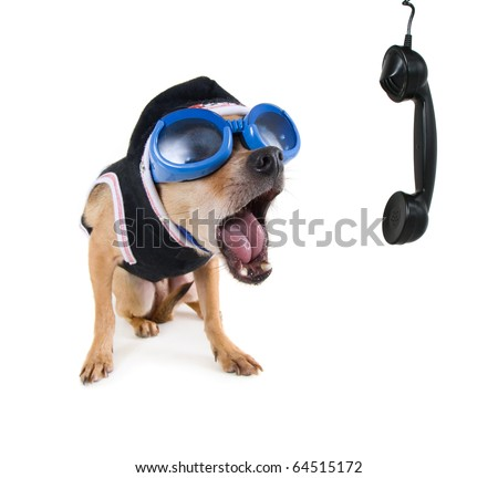 a tiny chihuahua with goggles and a jacket - stock photo
