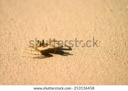 A tiny crab on a beach, blurred background. - stock photo