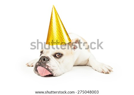 A tired looking Bulldog wearing a yellow party hat while laying and sticking his tongue out