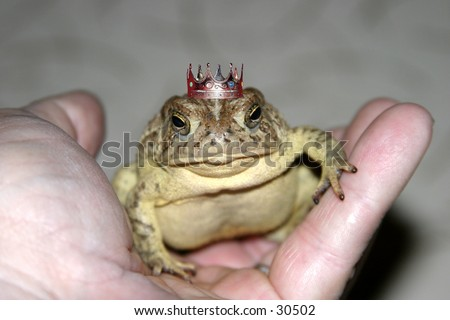 a toad sits in my hand one evening showing off its crown and proving its really a handsmome prince waiting for a damsel to kiss him and save him from the evil curse once placed upon him by a wicked witch - stock photo