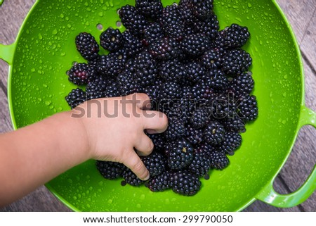 A toddler reaching for handful of fresh blackberries - stock photo