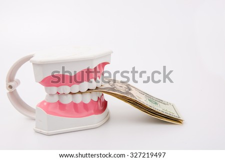 A tooth model with dollar notes isolated on white background
