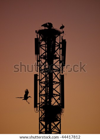 A tower of telecommunications with nests of storks