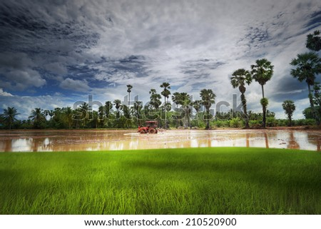A tractor and rice field - stock photo