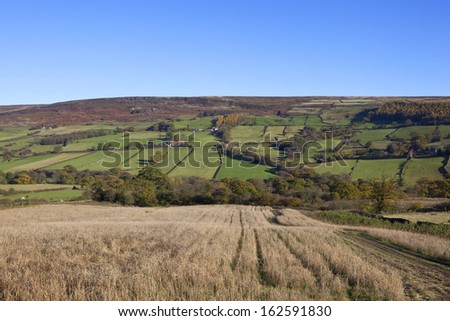 a traditional english country landscape in autumn on the north york moors with a clear blue sky - stock photo