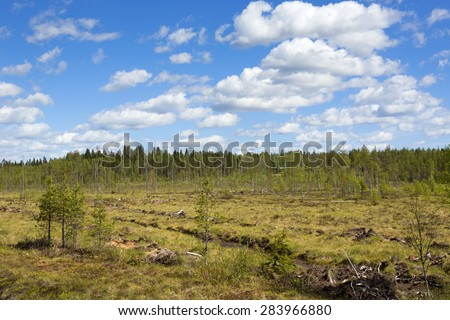 A traditional Finnish landscape in the summer. Dry swamp in a sunny day.