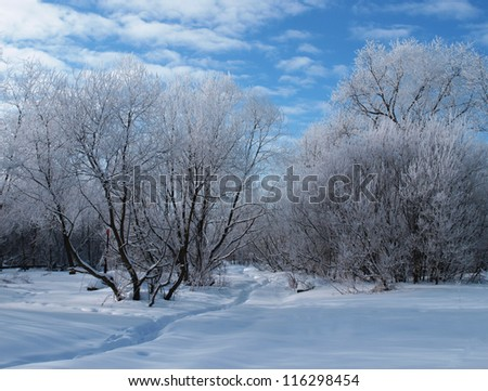 A trail between the trees covered with snow in winter - stock photo