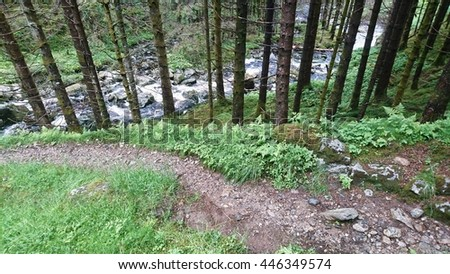 A trail in a forrest in Norway  - stock photo