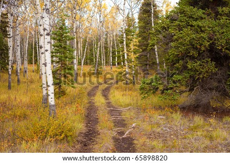 A Trail leads deeper into a fall-colored boreal forest (aspen, Populus tremuloides, black spruce, Picea mariana)  in Yukon Territory, Canada. - stock photo