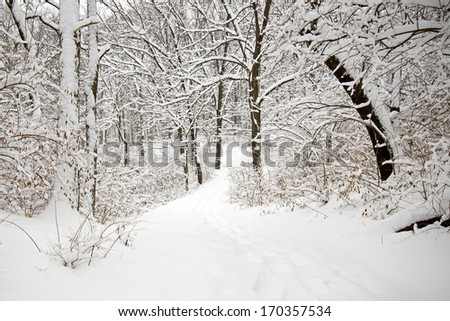 A trail through the winter woods after a heavy snowfall at The Morton Arboretum in Lisle, Illinois. - stock photo