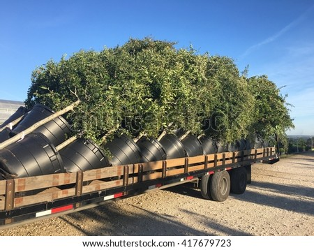 A trailer fully loaded with different species of trees.