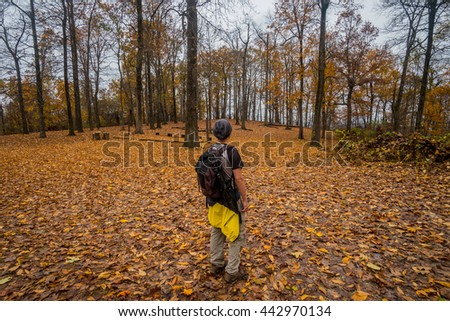 A traveller is hiking through the colorful and gloden mountain during fall foliage season in Virginia, USA