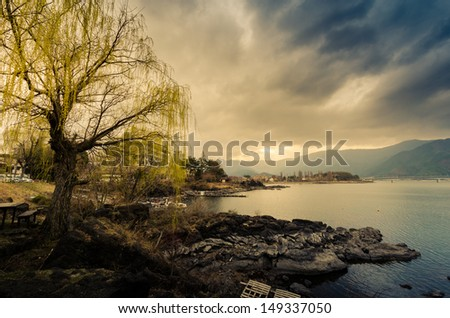 A tree by the shore of a Lake Kawaguchiko in a depressed mood - stock photo