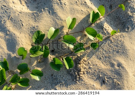 A tree grows in dry sand. It means the strong vitality of nature. - stock photo