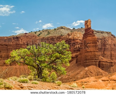 A tree grows in the rocky desert near the sandstone cliffs of Chimney Rock in Utah's Capitol Reef National Park. - stock photo