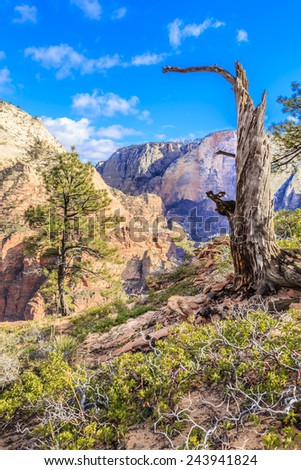A tree grows on the edge of the steep cliffs at Zion National Park, Utah, USA. - stock photo