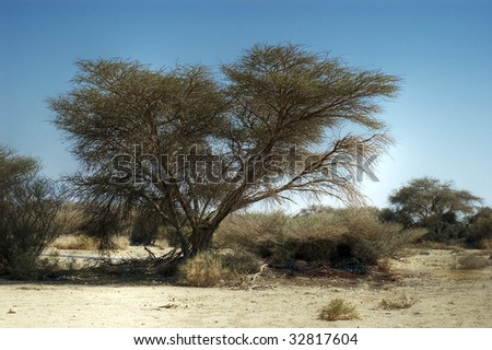 A tree in a desert