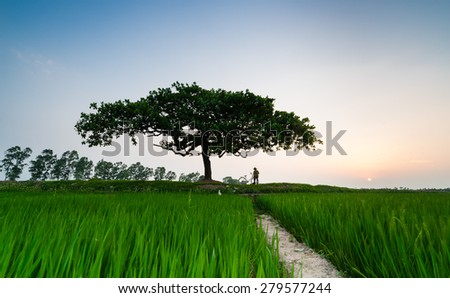 A tree in a field. - stock photo