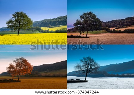 A tree in four seasons - stock photo