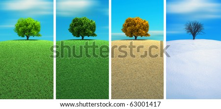 A tree in four seasons - 3d render - stock photo