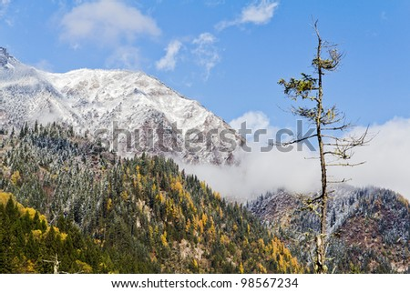 A tree in front of snow-covered peaks - stock photo