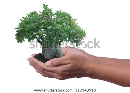 A Tree in hand. - stock photo