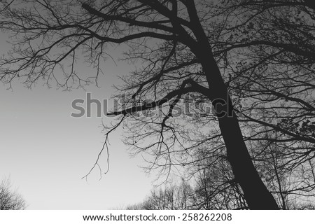 A tree in the dark at the cloudless sky - stock photo