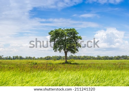 A tree in the green field with blue sky  - stock photo