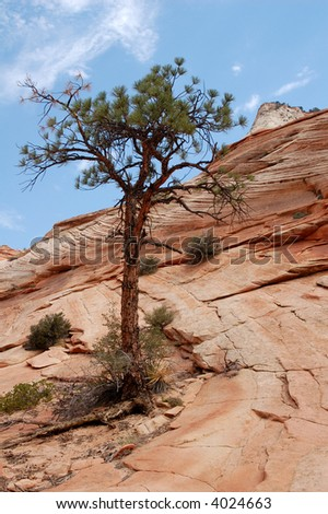 A tree in the red rocks of the southwest USA.