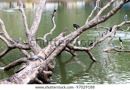 A tree in the water with birds and water monitors, Sri Lanka - stock photo