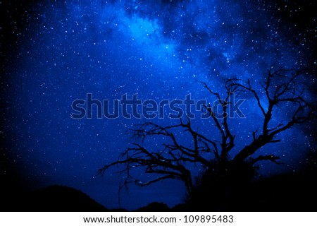 A tree is silhouetted against the beauty of the milky way in a dark sky location