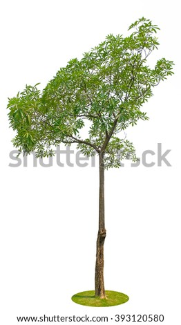 a tree isolated on white with clipping path