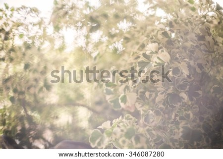A tree on concept blurred and soft tone vintage ,This image, process is blurred. To spread soft feel about peacefully, dreams are appropriate to place a background image for related content - stock photo