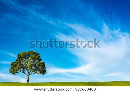 a tree on green grass field across the beautiful clouds in the  blue sky of Thailand